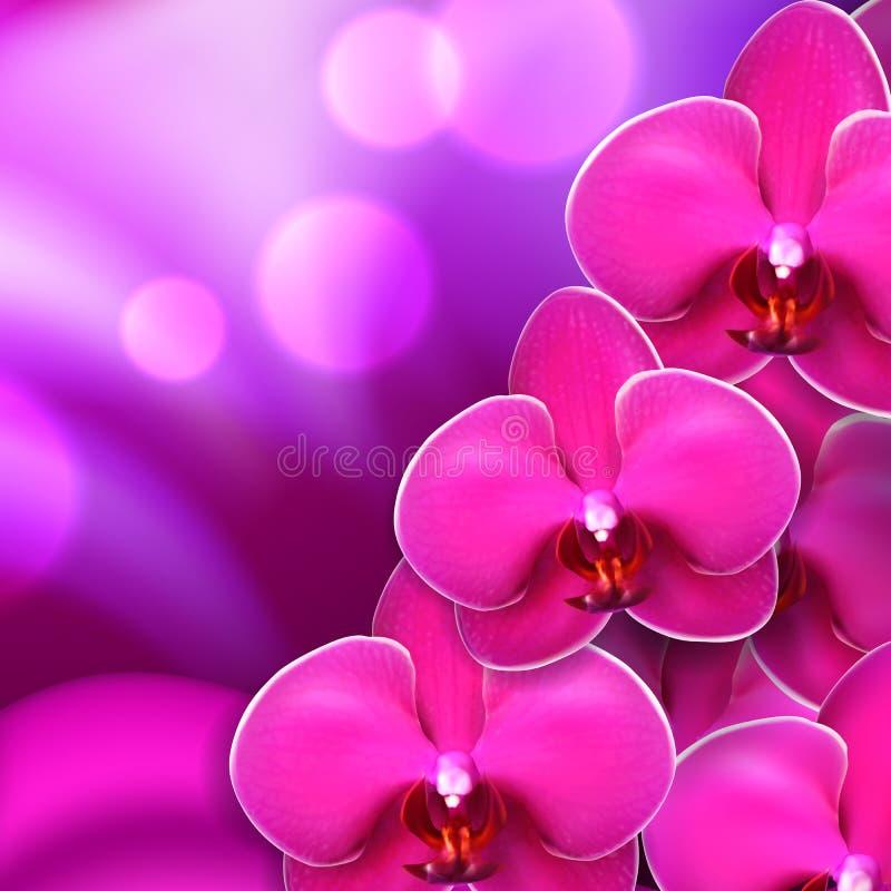 Różowy kwiat orchidei tło royalty ilustracja