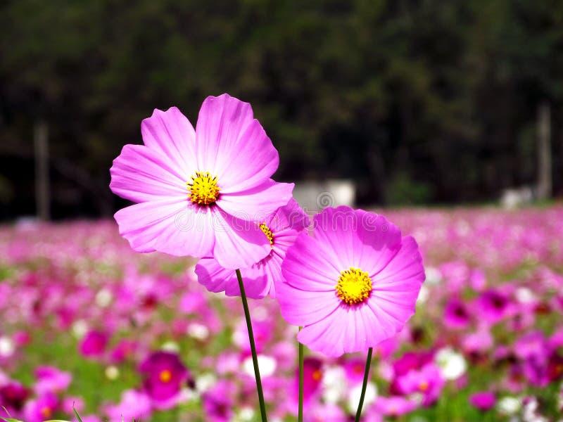 Różowy kwiat w piękna tle i lesie obrazy royalty free