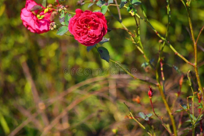 Różowy kwiat w plamy tle zdjęcie royalty free