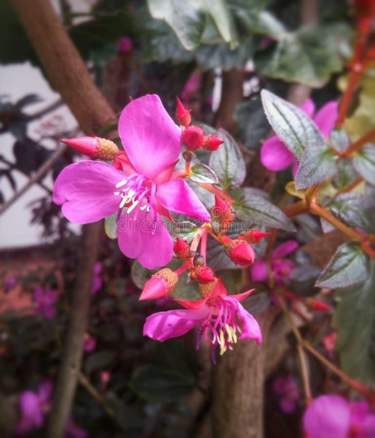Różowy kwiat z egzotycznym spiczastego i czułka kształtem obrazy royalty free