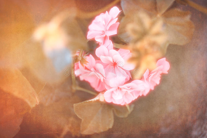 Różowy kwiat z filtrem zdjęcie stock