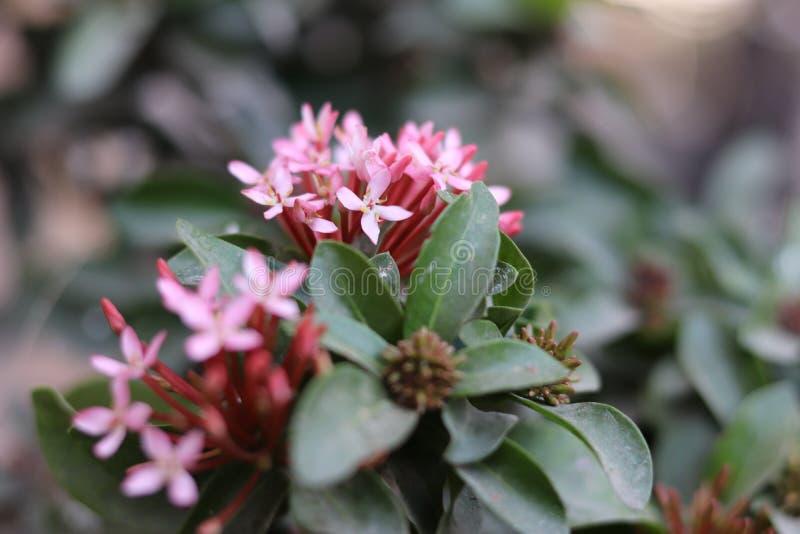 Różowy kwiatu bukiet obraz royalty free
