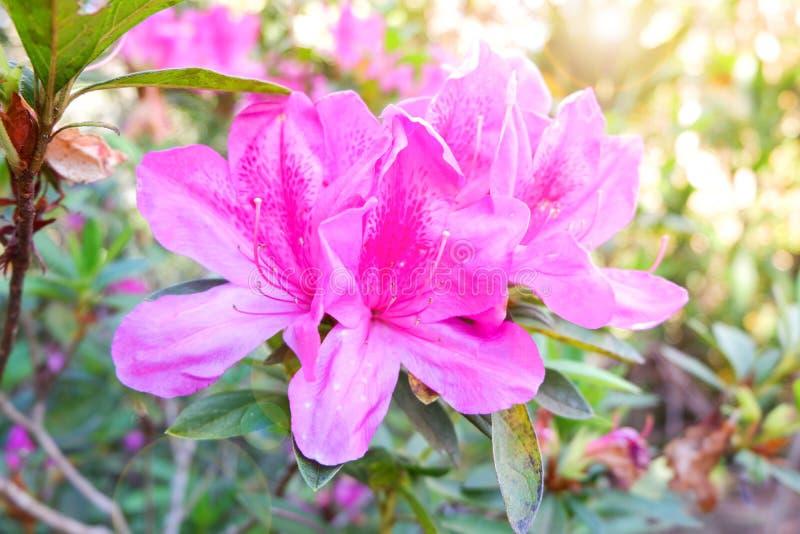 Różowy kwiatu las obrazy stock