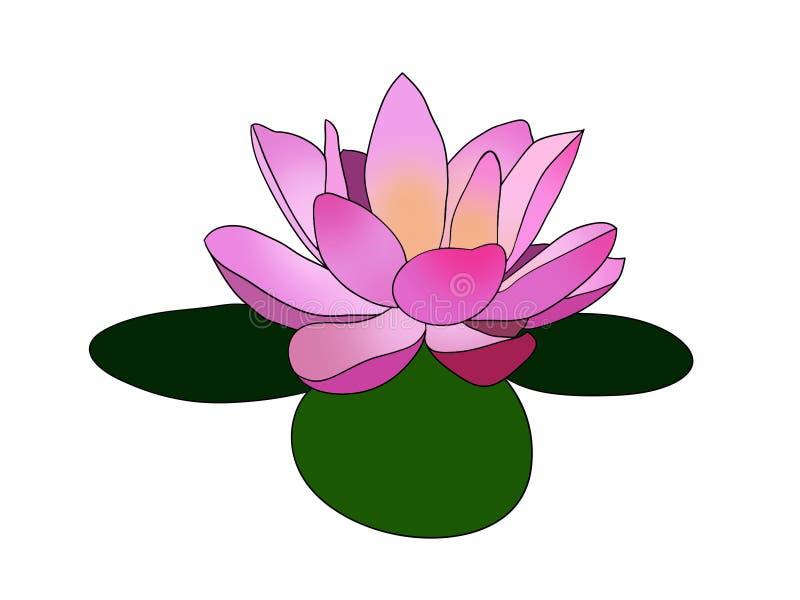 Różowy lotos, Lilly kwiat na trzy liści loga projekta zielonej ilustraci/ ilustracja wektor