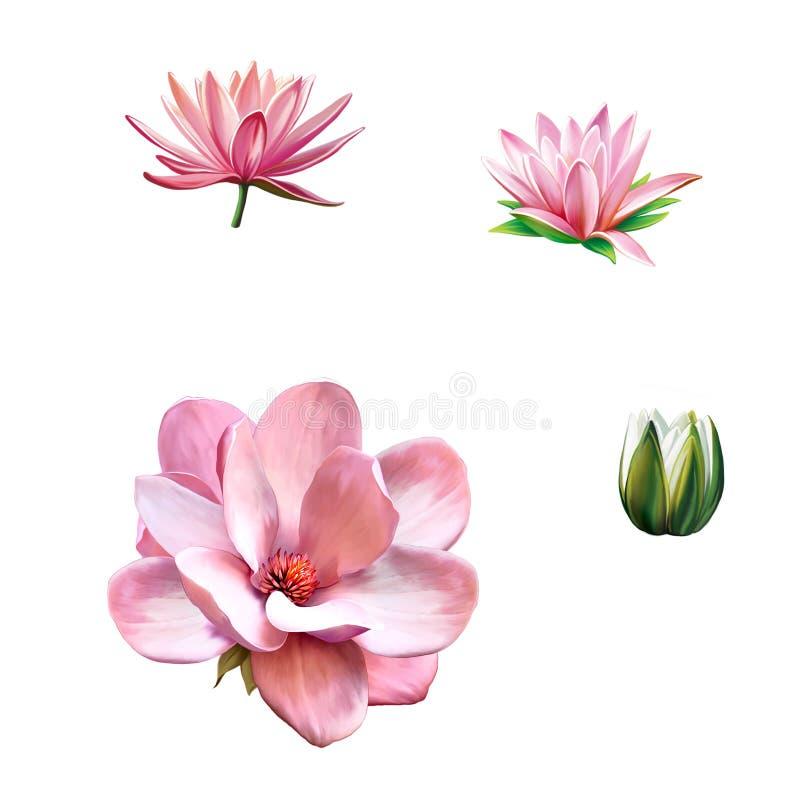 Różowy magnoliowy kwiat, wiosna kwiat, Lotus, woda ilustracja wektor