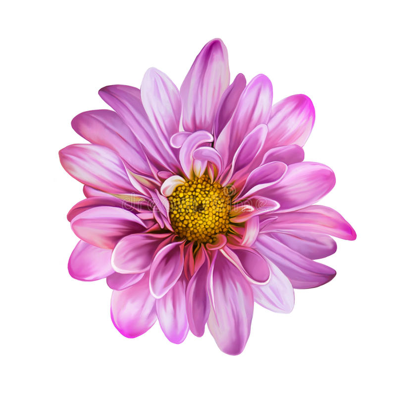 Różowy Mona Lisa kwiat, kwiat royalty ilustracja