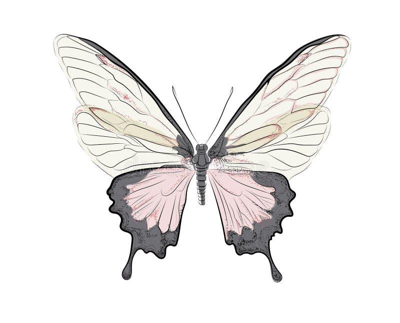 Różowy motyl royalty ilustracja