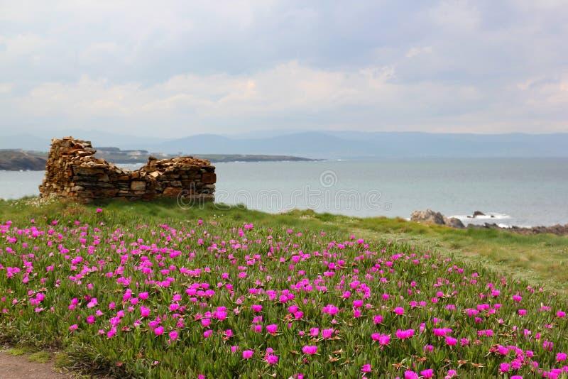 Różowy ogród morzem obrazy stock