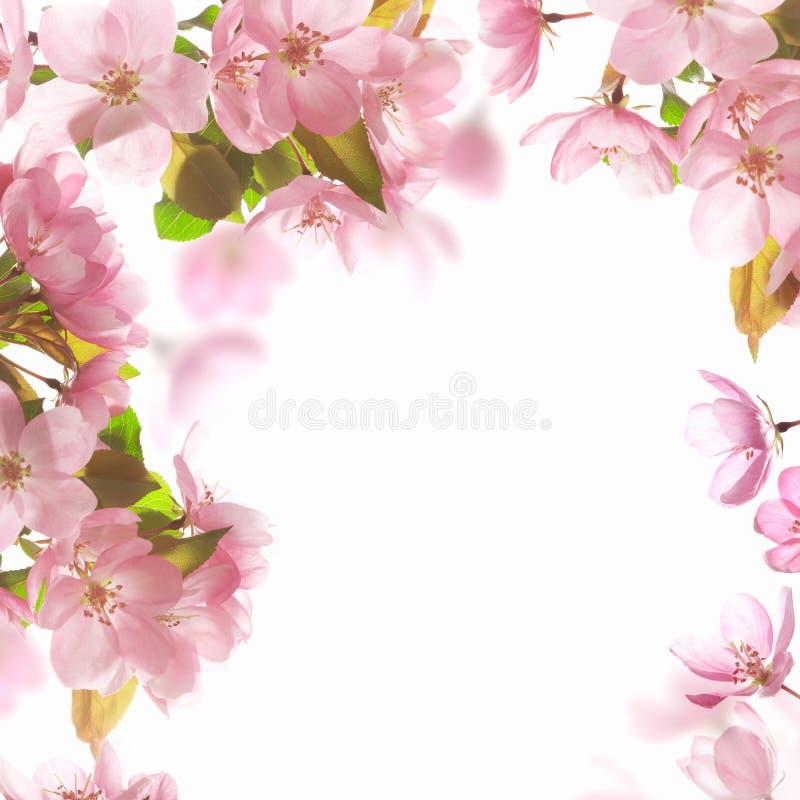 Różowy okwitnięcie obrazy royalty free