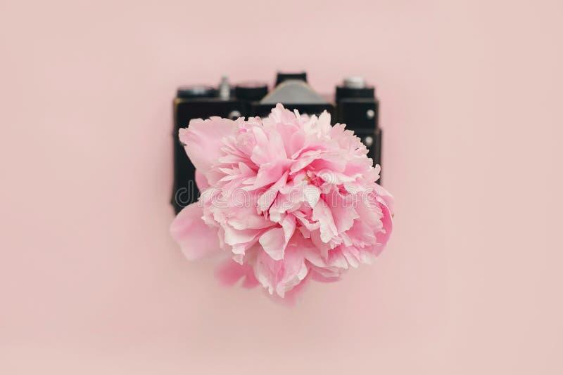 Różowy peoni dorośnięcie od rocznik fotografii kamery na pastelowych menchiach tapetuje Kobiecy mieszkanie kłaść z kopii przestrz obraz royalty free