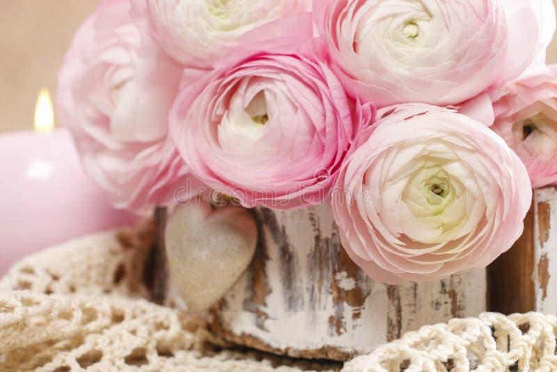 Różowy perski jaskier kwitnie (ranunculus) zdjęcia stock