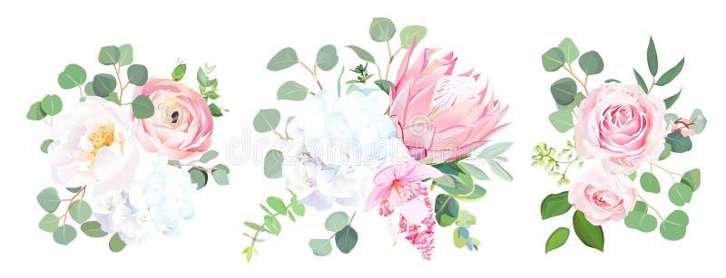 Różowy protea, ranunculus, wzrastał, medinilla, biała hortensja, seede ilustracji