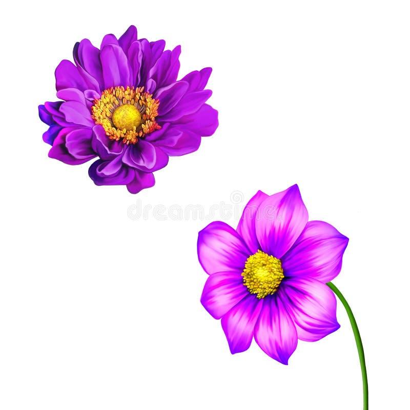 Różowy Purpurowy Mona Lisa, wiosna kwiat, dalia kwiat ilustracji