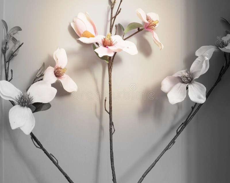 Różowy storczykowy kwiatu krzak z popielatym tłem obraz stock