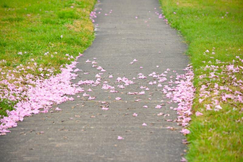Różowy Tubowy ślad fotografia stock