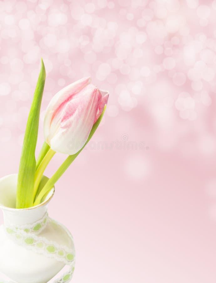Różowy tulipan w białej wazie na tle z bokeh obrazy stock