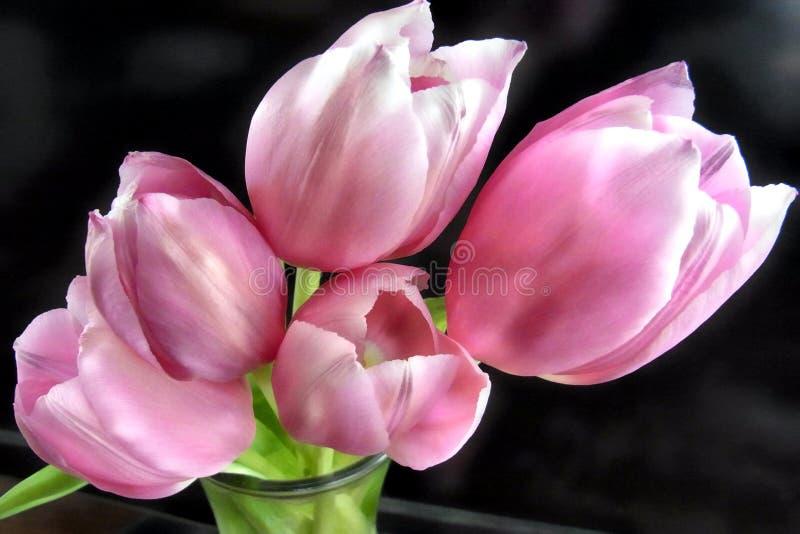 Różowy tulipan w wazie obraz royalty free