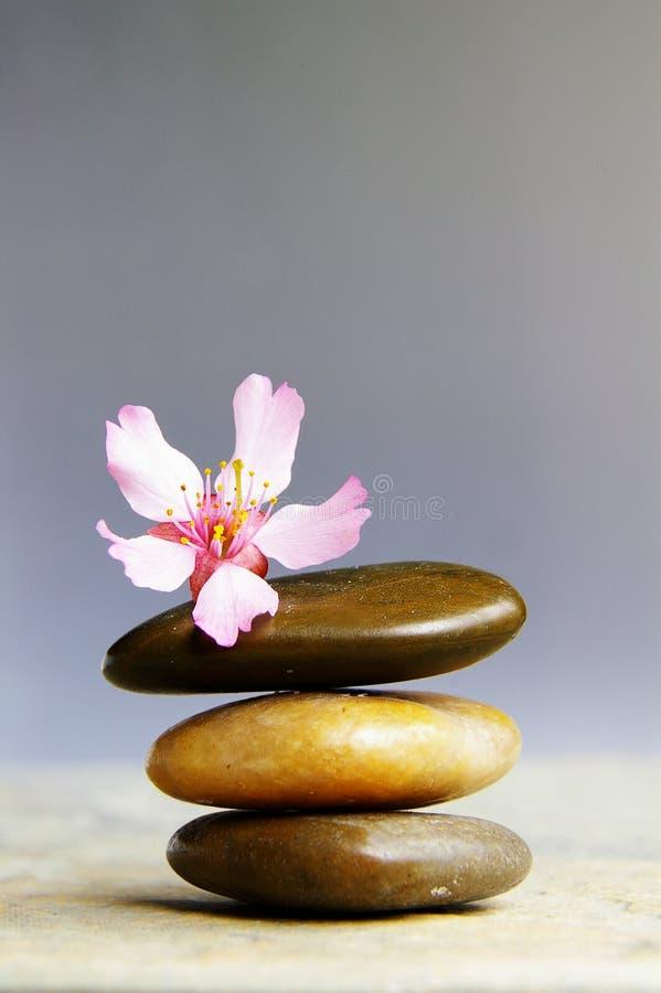 różowy wafelek fotografia stock