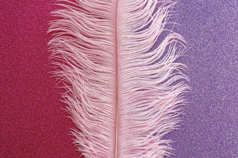 Różowy wispy strusia piórka mieszkanie na różowym purpurowym sparkly tle zdjęcie stock