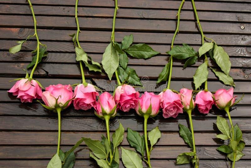 Róży pasmo zdjęcie stock