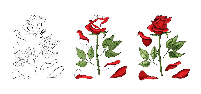 Róży ręki rysunek i barwiący Kwitnie rosebud również zwrócić corel ilustracji wektora ilustracja wektor