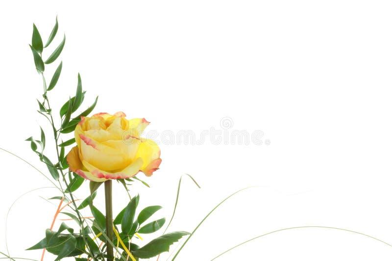 Download Różana herbata obraz stock. Obraz złożonej z obdarzony - 13329793