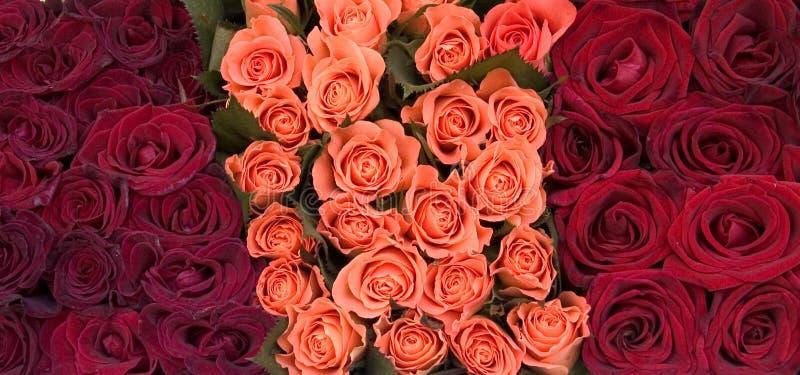 Download Róże zdjęcie stock. Obraz złożonej z wzrastał, płatek, bukiet - 26158