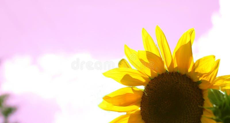 - Różowy Fotografia Stock