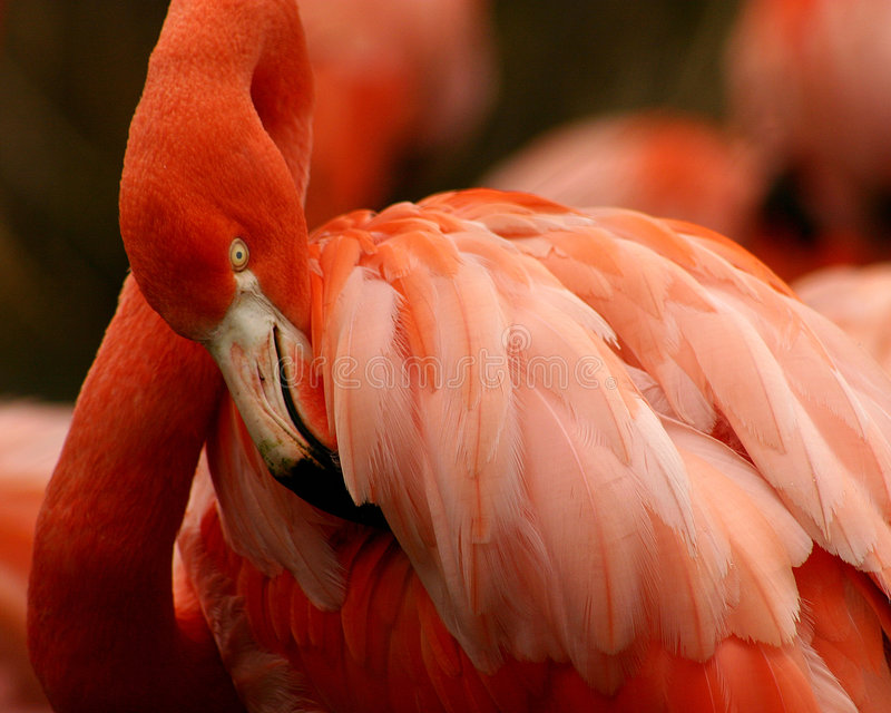 Download - różowy obraz stock. Obraz złożonej z dosyć, natura, zwierzęta - 39697