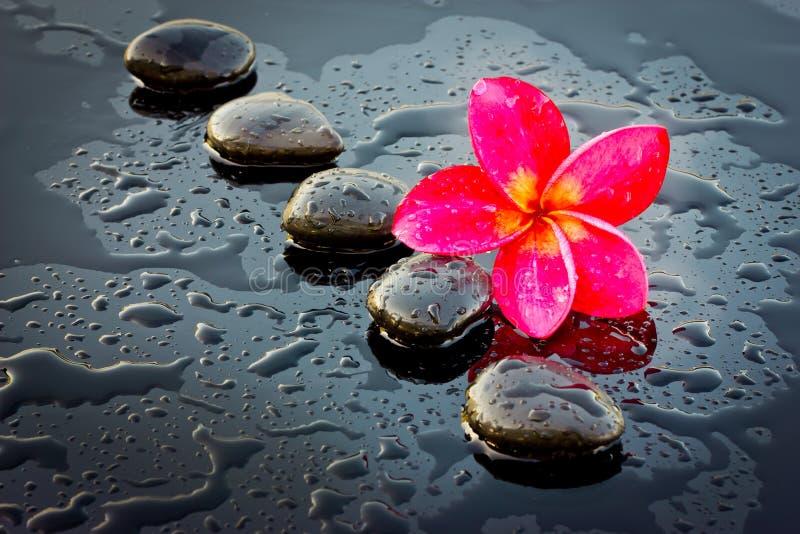Röd adeniumblomma och brunnsortsten för hälsa. fotografering för bildbyråer