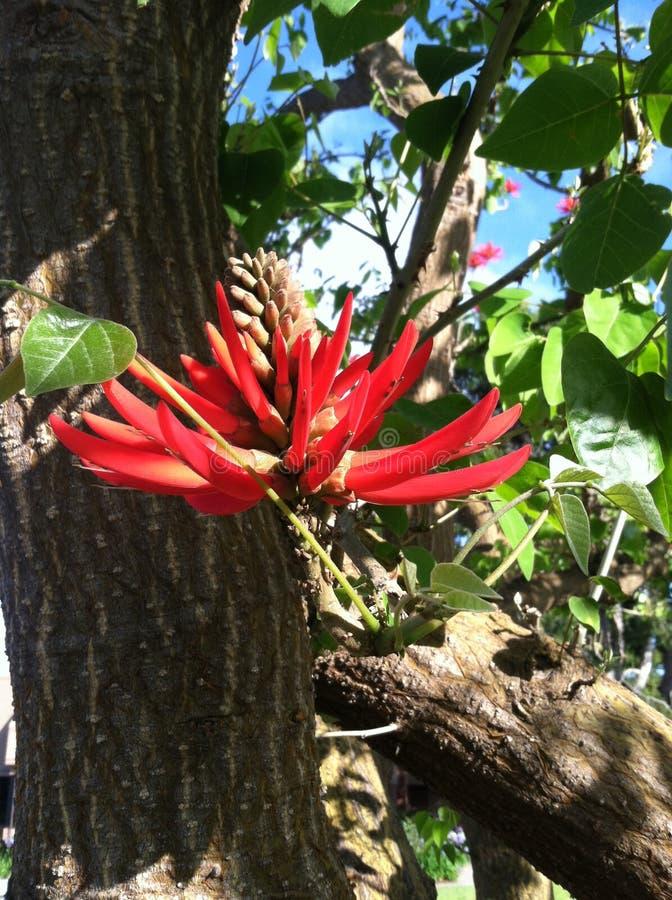 Röd blom arkivbilder