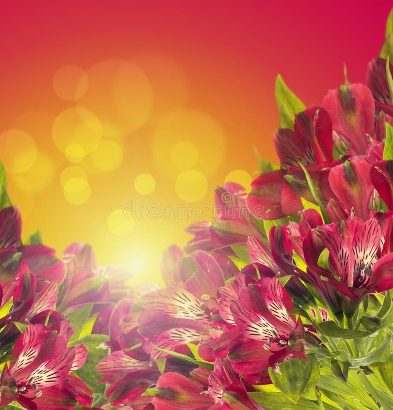 Röd blom- freesiabakgrund med bokeh arkivfoton