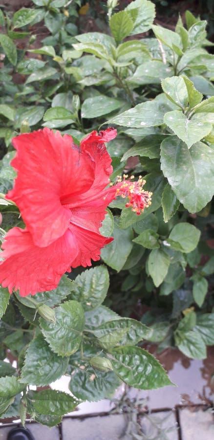Röd blomma för härligt grönt träd arkivfoton