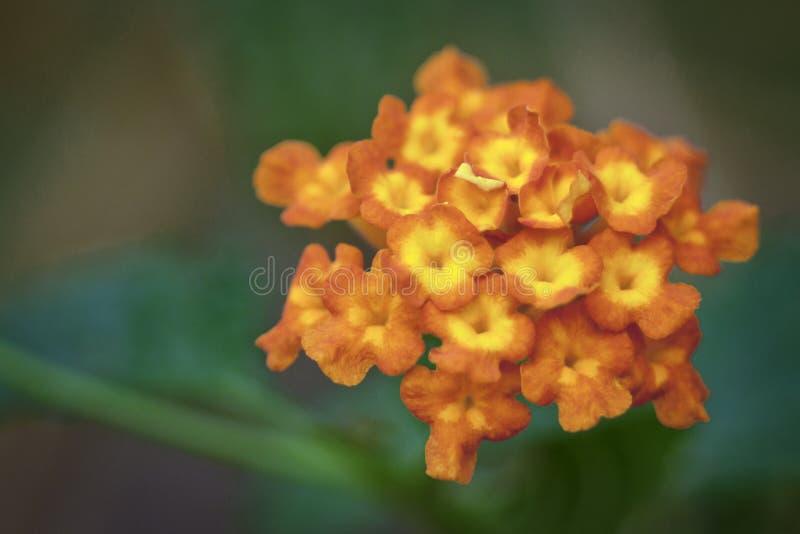 Röd blomma i natur royaltyfri foto