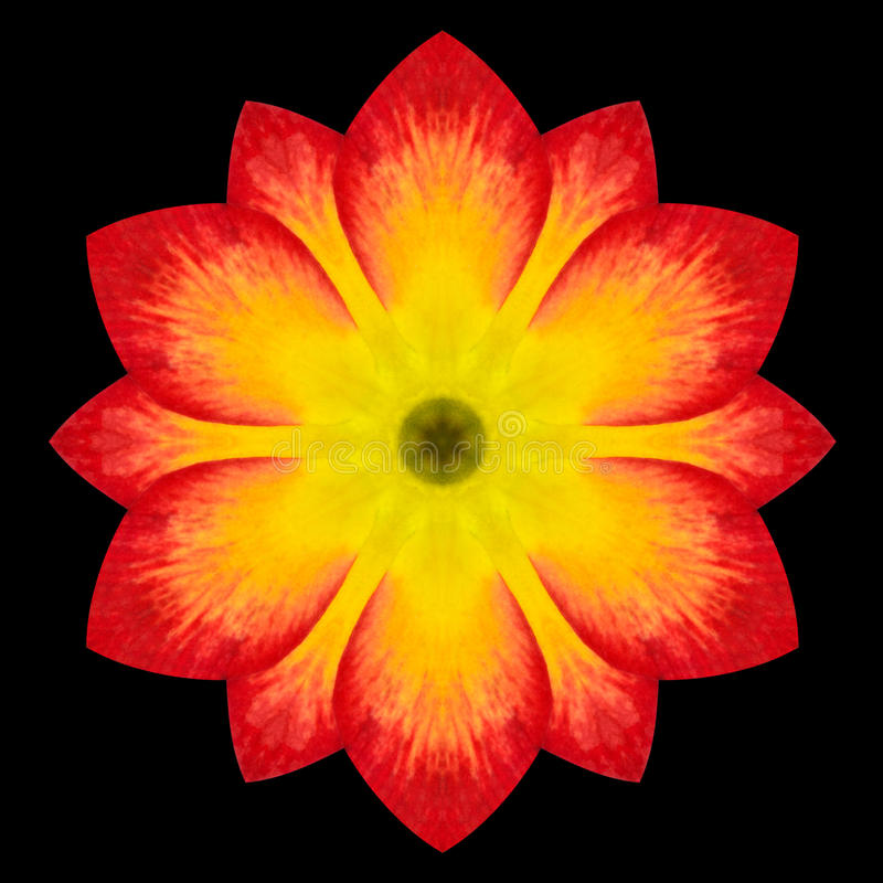 Röd blomma Mandala Kaleidoscope Isolated på svart arkivbild