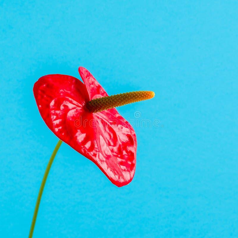 Röd blomma på en ljus kulör bakgrund royaltyfria foton