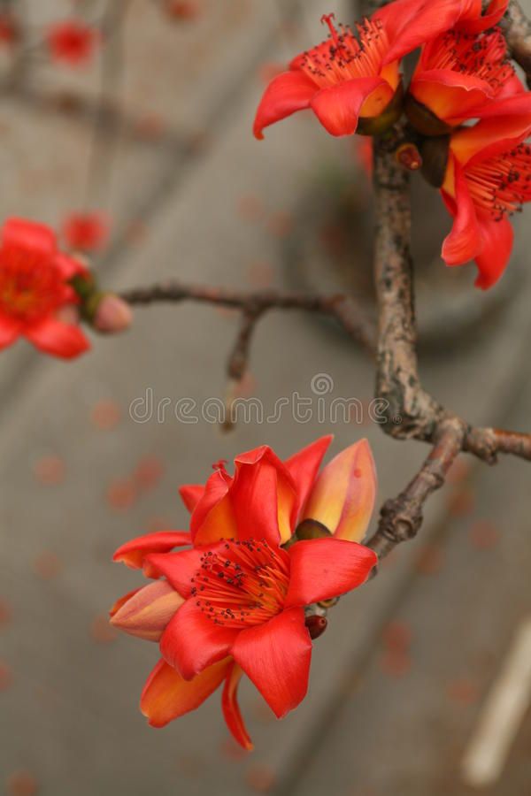 Röd blomma på hösten royaltyfria foton
