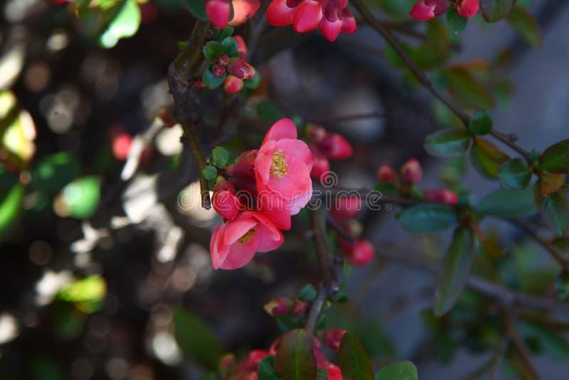 Röd blomma på trädet på banken av flodmakroskottet royaltyfria foton