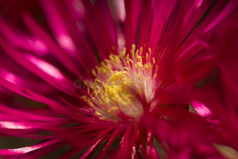 Röd blommabristning fotografering för bildbyråer