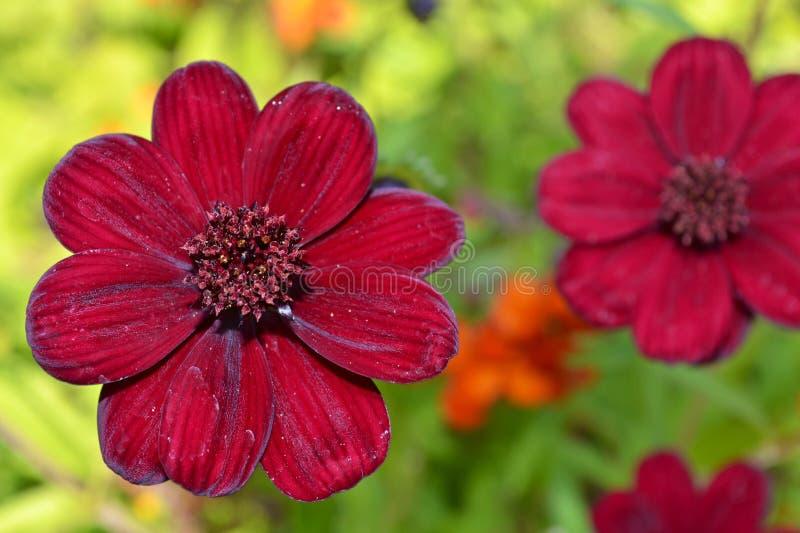 Röd Blommaträdgård Royaltyfri Foto
