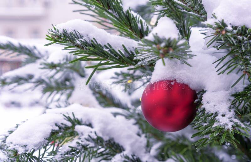 Röd boll på en snöig julgran Garneringar nytt år, jul arkivbilder