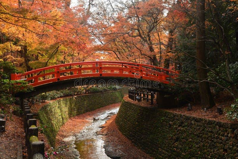 Röd bro i en japansk trädgård med röda lönnar, nedgånghav royaltyfria bilder