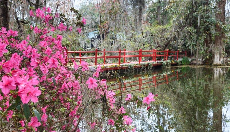 Röd bro med vårazaleor i South Carolina arkivfoton
