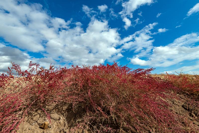Röd buske mot den blåa himlen arkivfoto
