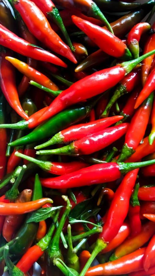 Röd chilibakgrund, selektiv fokus royaltyfri fotografi