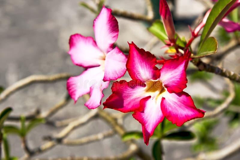 Röd exotisk blomma royaltyfri foto