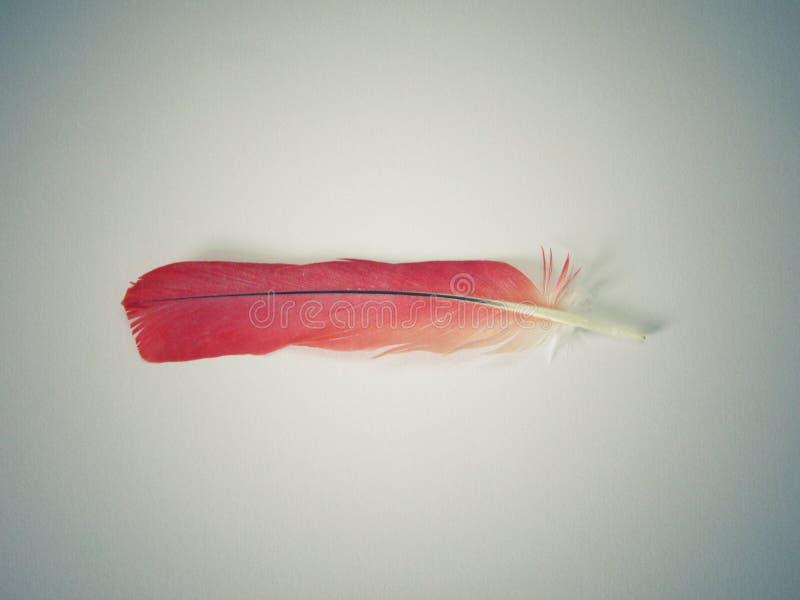 Röd fjäder arkivbild