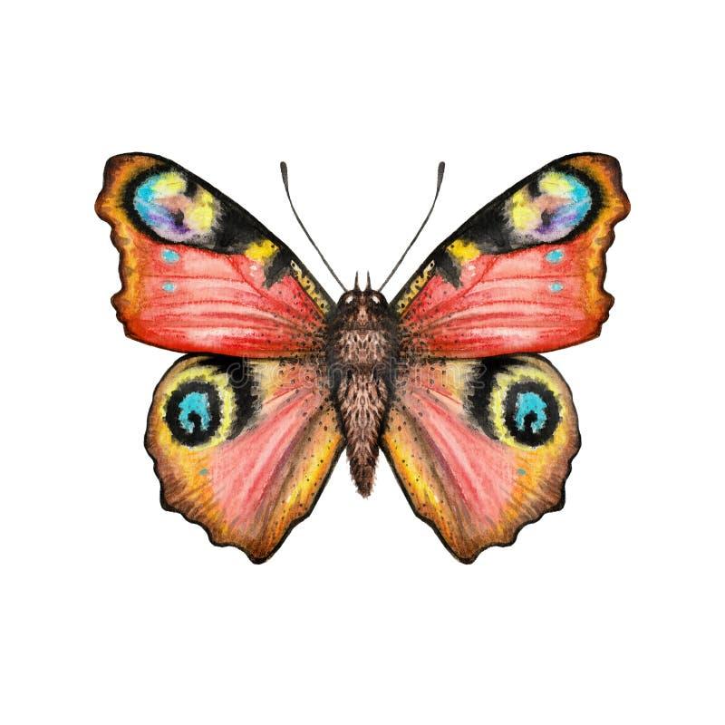 Röd fjäril för illustration med ögonvattenfärgen vektor illustrationer