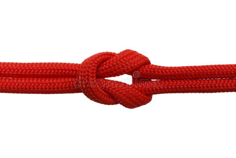 Röd fnuren arkivfoto