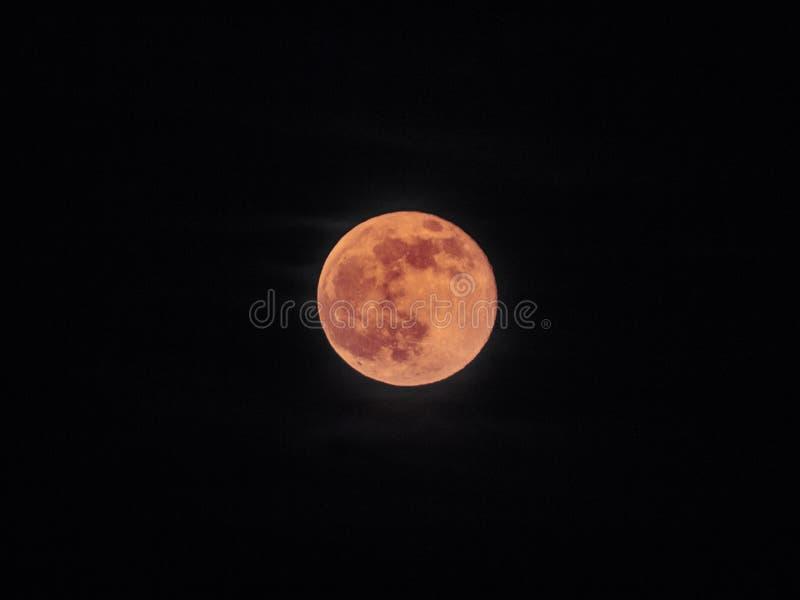 Röd fullmåne, blodmåne - isolerad bloodmoon - fotografering för bildbyråer